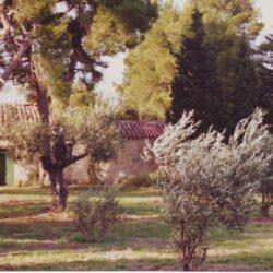 Mignarde-Maison-des-Oliviers